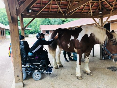 La toilette des chevaux faite par les adhérents.