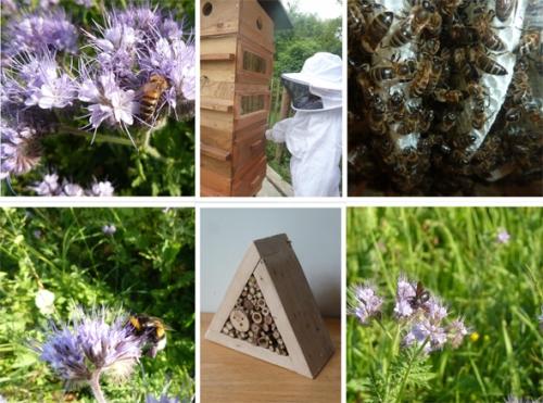 Les abeilles, sauvages et domestiques